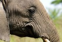Olakira-Camp-elephant-portrait-MR.jpg