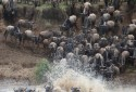 Olakira-Camp-wildebeest-crossing-1-MR.jpg