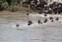 Olakira-Camp-wildebeest-crossing-2-MR.jpg